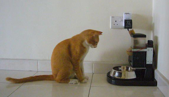 automatic feeder large toppets full review cat pet csf